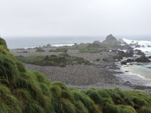 The royal penguin colony at Hurd Point